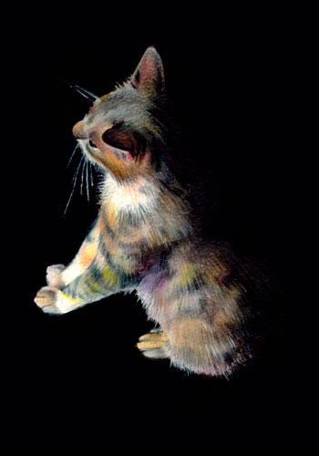 barn-cat-no-1