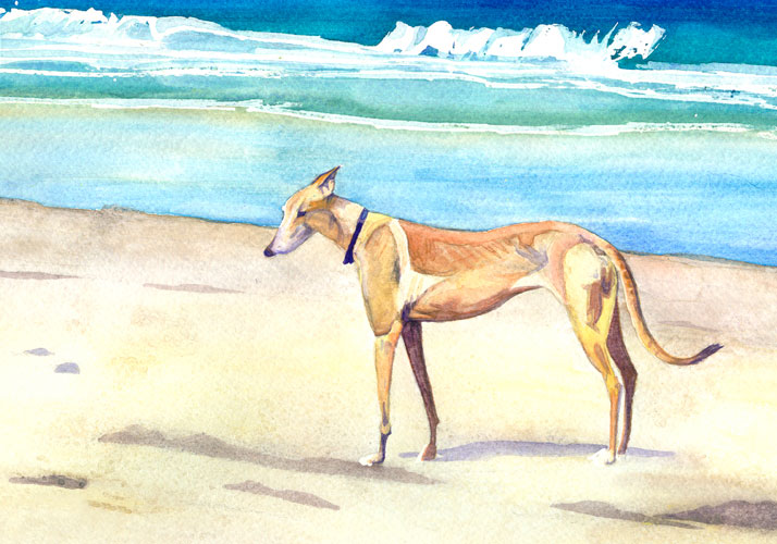 mae-at-dog-beach